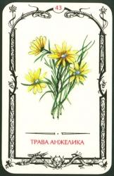 card43